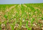 finanziamenti ai giovani agricoltori