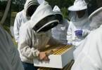 corsi di formazione in apicoltura