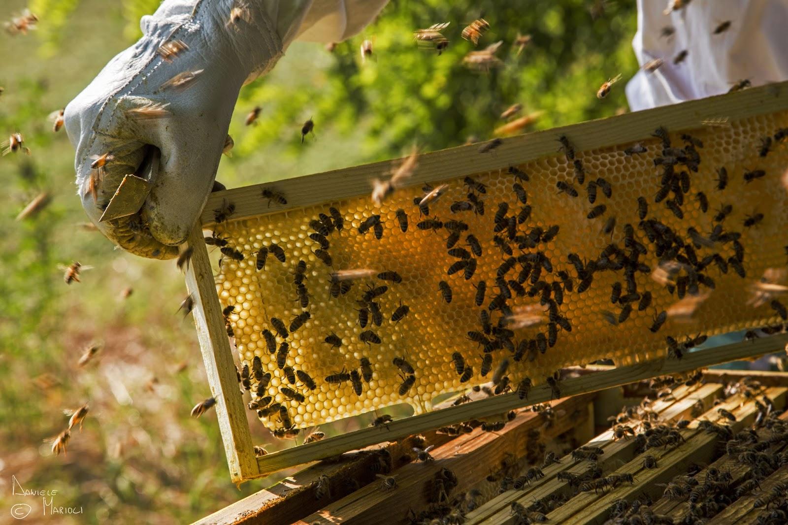 finanziamenti apicoltura sardegna