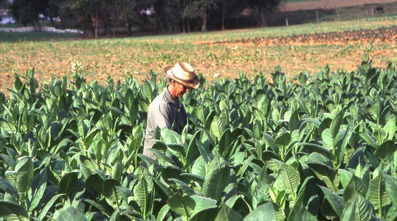 agevolazioni-piccola-proprieta-contadina