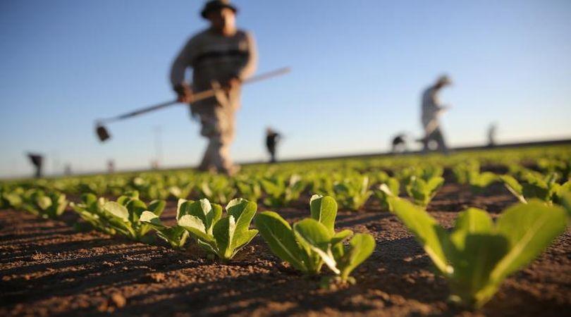 incentivi-per-lagricoltura-piemonte-finanziamenti