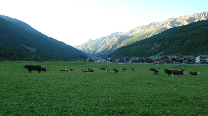 bando-agricoltura-lombardia-concede-alpeggi