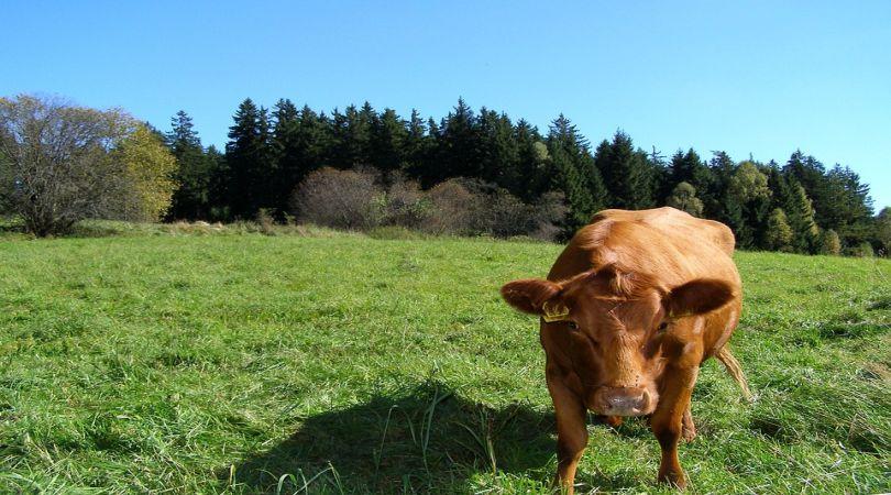 veneto-il-via-al-nuovo-bando-per-la-sostenibilita-delle-aziende-agricole