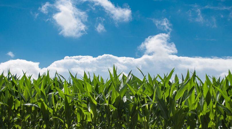 """approvato-il-collegato-agricoltura"""""""