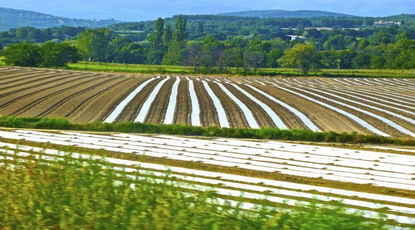 finanziamenti-agevolati-con-i-contratti-di-filiera-novita-per-lagricoltura