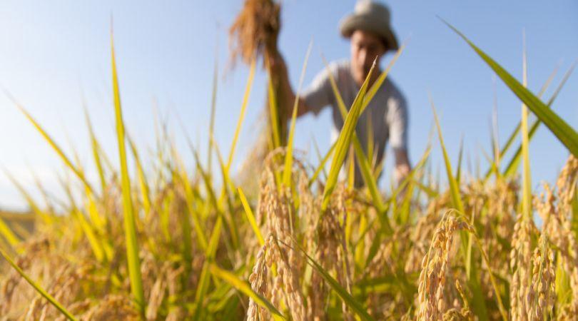 lazio-bando-per-lavviamento-dimpresa-nel-settore-agricolo