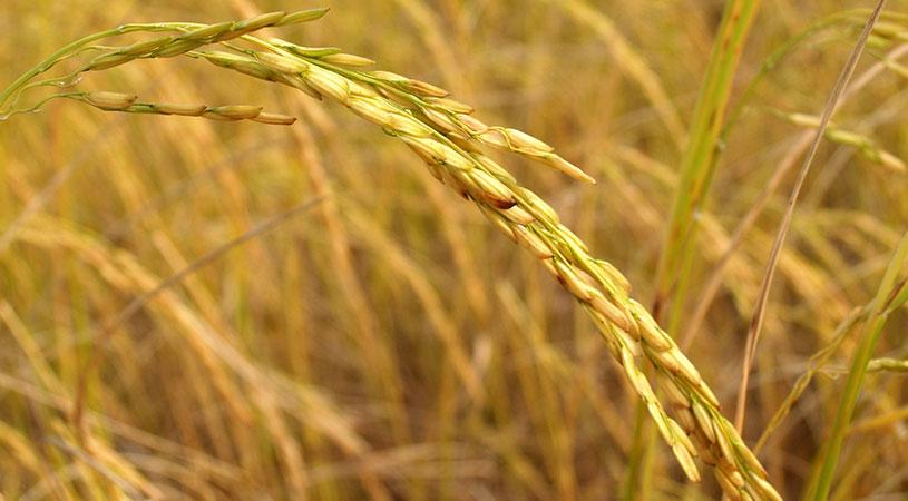 finanziamenti agricoltura sicilia