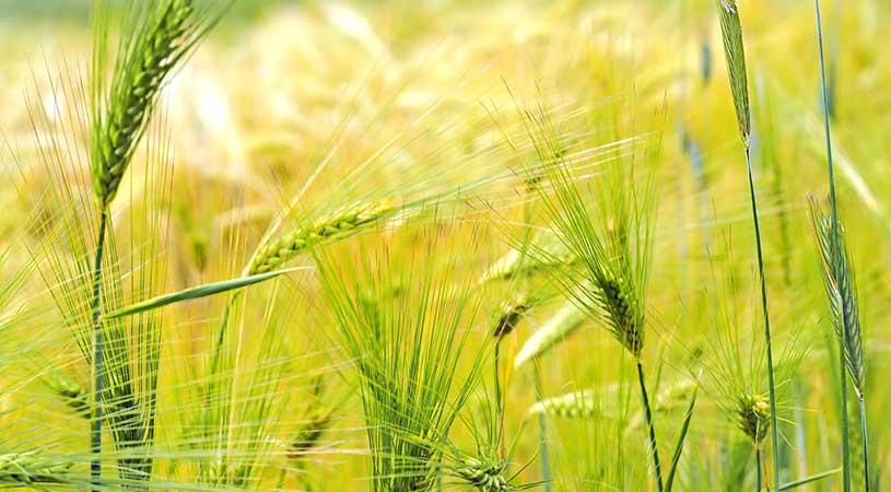 bando a sostegno delle aziende agricole