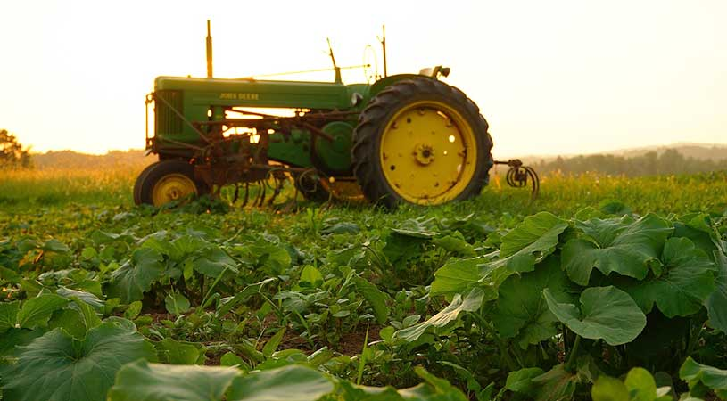 coltivatore diretto