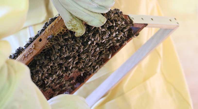 bando apicoltura Umbria
