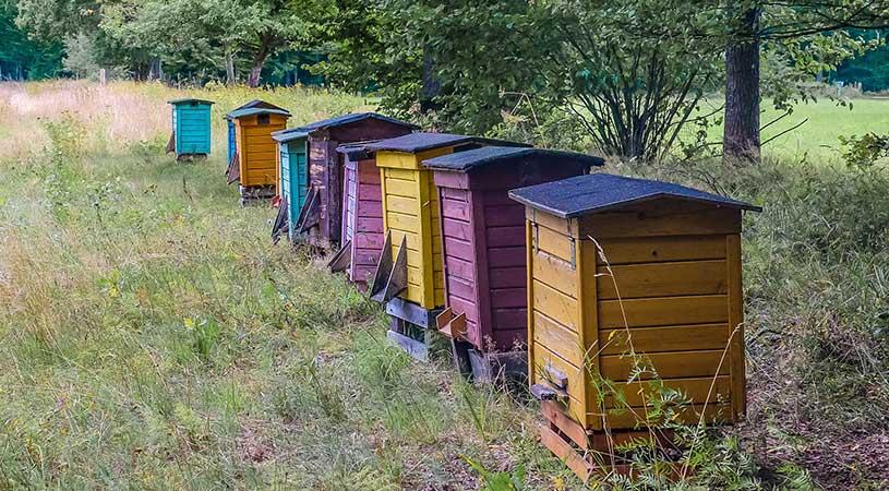 bando apicoltura