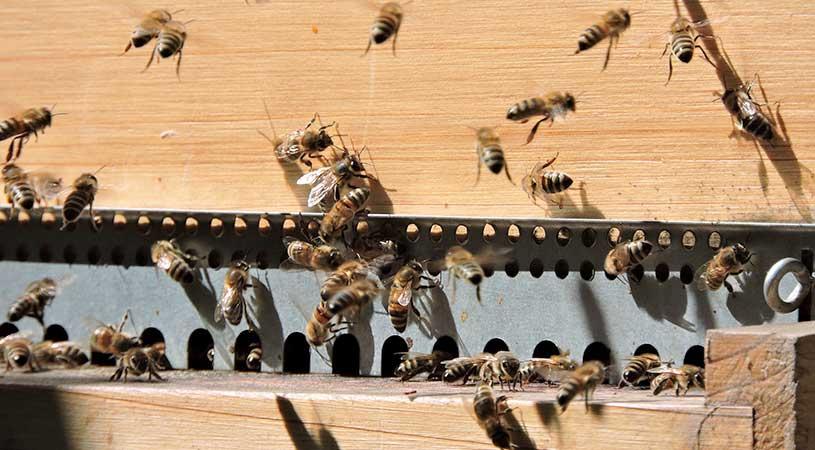 finanziamenti apicoltura
