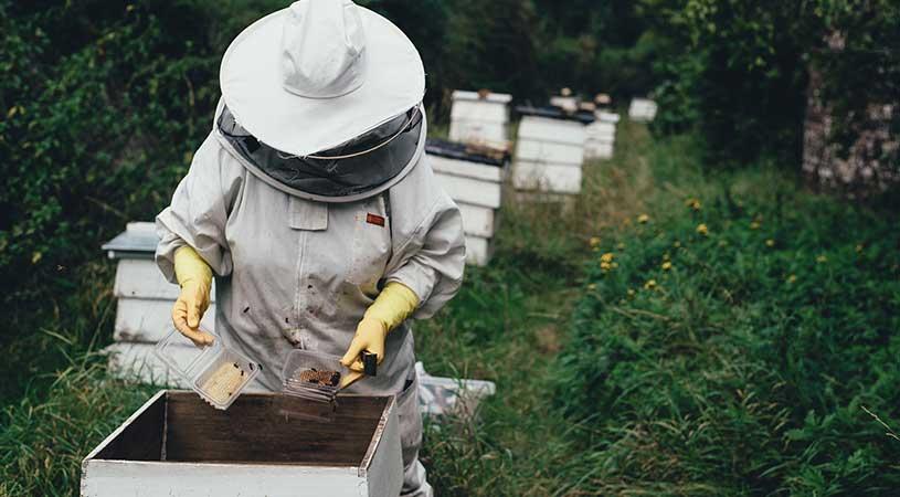 finanziamenti apicoltura lazio