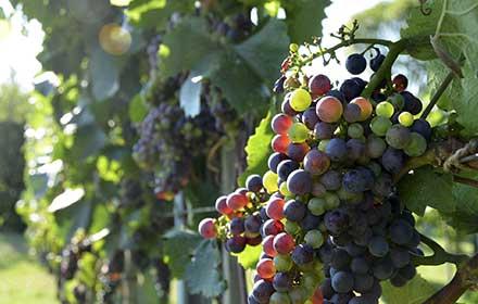 investimenti nel settore vitivinicolo