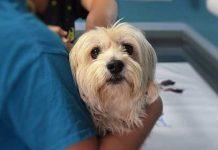 detraibilità delle spese veterinarie