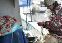 pesca e acquacoltura in abruzzo