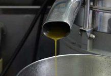 contributi settore olivicolo