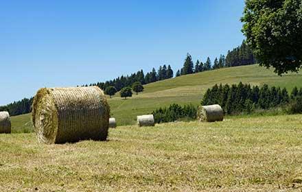 bando per aziende agricole regione marche
