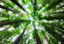 Contributi a fondo perduto per chi impianta nuovi boschi