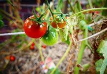 finanziamenti agricoltura biologica