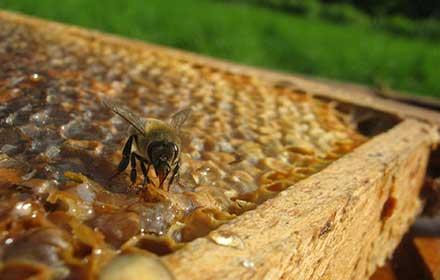 abruzzo contributi per l'apicoltura