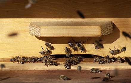 finanziamenti per apicoltura