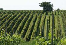 promozione prodotti agricoli piemontesi