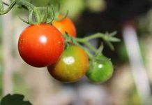 regolamento agricoltura biologica