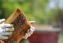 bando apicoltura regione umbria