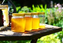 contributi apicoltura Toscana